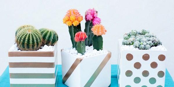 CactusPlanters-14-final-Copy